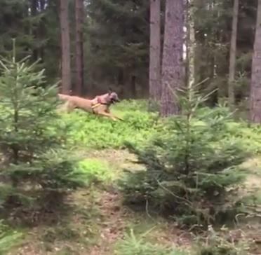 Sport-Rettungshund