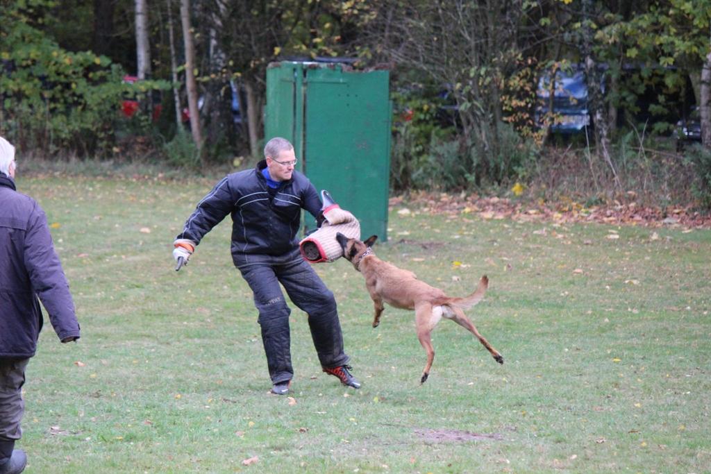 Hundesport Buchholz i.d.N.