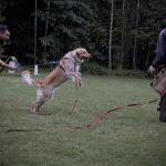 Training Schutzdienst