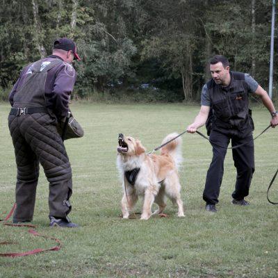 Bo Schutzdienst Training