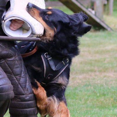 Bela Schutzdienst