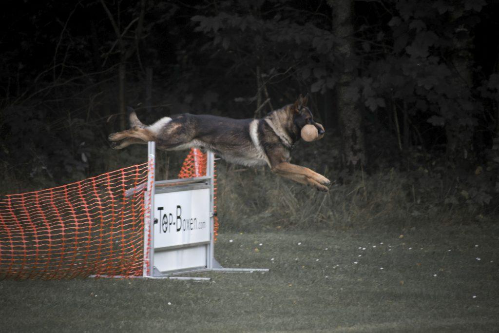 Training Unterordnung Springen